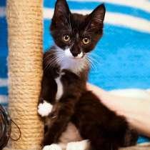 Маленькое чудо Томас, ласковый котенок в добрые руки, в г.Санкт-Петербург