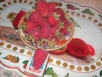 Саженцы малины, в Курске