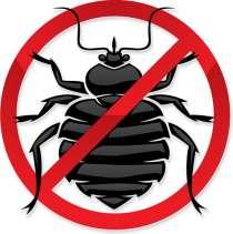 Уничтожение клопов, тараканов и других насекомых, в Каменске-Уральском