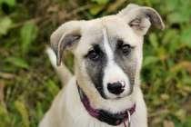 Два очаровательных щенка ищут дом, в Зеленограде