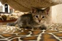 Отдам даром Котёнок, в Коломне