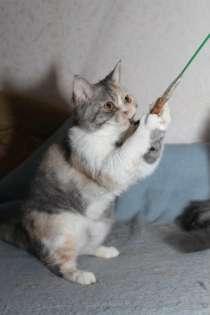 котята, в Волгодонске