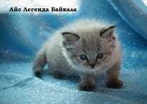 2 котика, в Иркутске