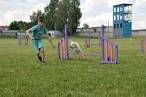 Кинологическая спортивная школа, в г.Минск