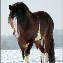 Продам лошадей!, в г.Астана