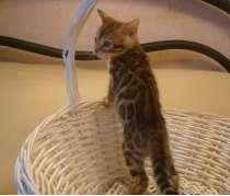 Бенгальские котята из профес-го питомника. Большой выбор, в Казани