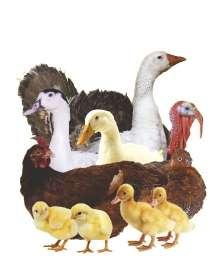 Комбикорм для всех видов птиц, в Красноярске