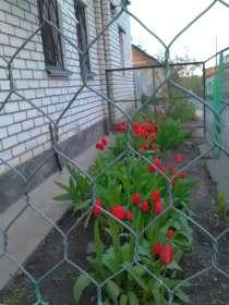 Теплый дом, в Воронеже