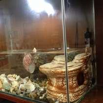 Аквариум, размер 50х25х40, с ракушками и краснаухой черепахо, в Владикавказе