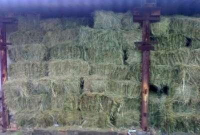 сено в рулонах и тюках в Челябинске Фото 2