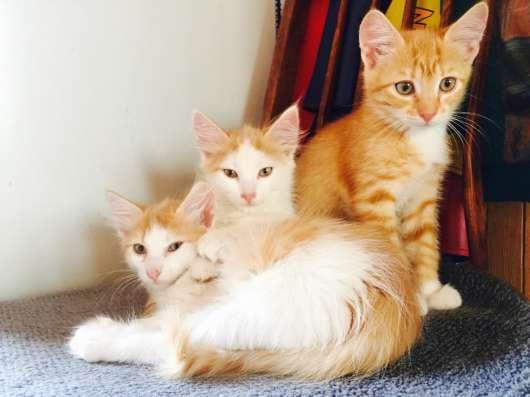 Котята в дар в г. Минск Фото 1