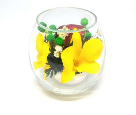 Орхидеи желтые