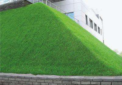 Травосмесь для придорожнгого озеленения