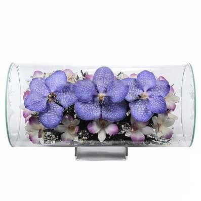 Орхидеи фиолетовые тёмные в Москве Фото 1