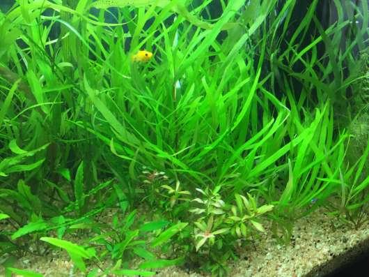 Набор растений в аквариум