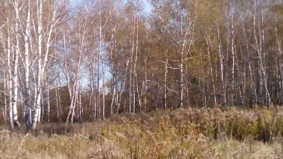 Земельный участок в коттеджном поселке в Бийске Фото 1
