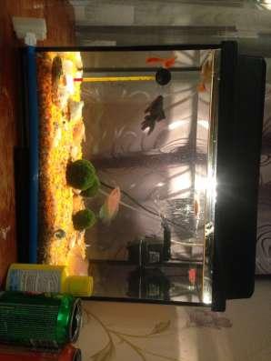 Продам аквариум в Москве Фото 2
