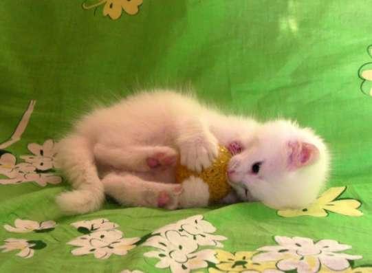 Белый котёнок ждёт хозяина. Возможна доставка. в Москве Фото 2
