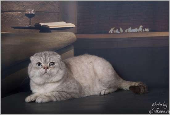 Вязка. Колорный кот открыт и ждёт страйточек в Москве Фото 1