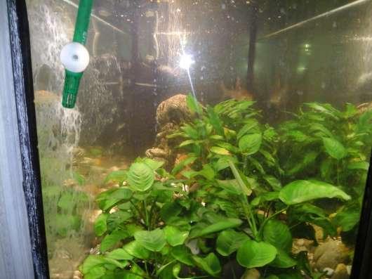 Продается Аквариум (200 л) с рыбами, живыми растениями