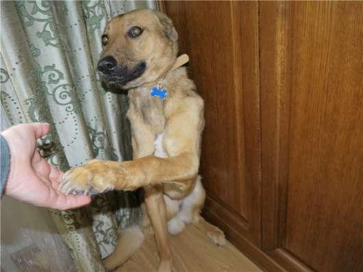 Молодой пес дик