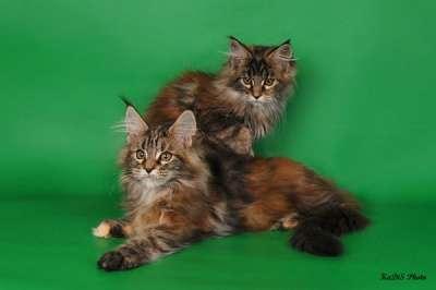 Кошки и котята в Москве Фото 4