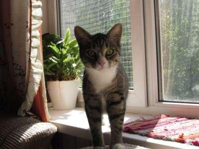 Отдам даром Кошка Пайпер в хорошие руки в Санкт-Петербурге Фото 1