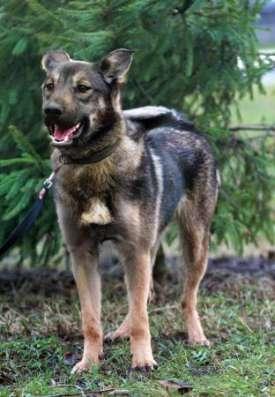 Деликатная, с открытой душой собачка Лола ищет дом.