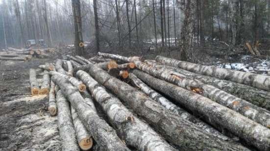 Лес на корню в Калуге Фото 1