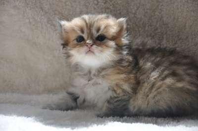 Удивительные котята в г. Белореченск Фото 2