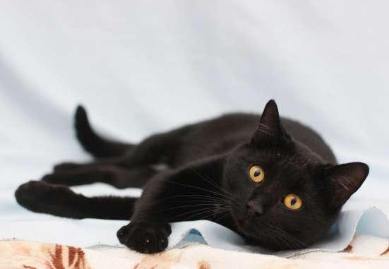 Очаровательный кото-мальчик Зевс ищет семью!