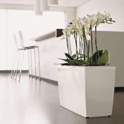 Цветы растения в офис