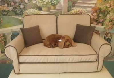 Диван-лежанка для собак и кошек в Щелково Фото 3