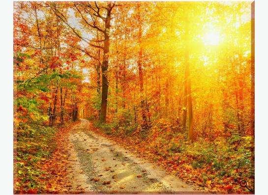 Фотокартина на холсте: Теплое осеннее солнце