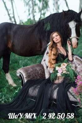 Фотосессия с лошадьми! в Красноярске Фото 1