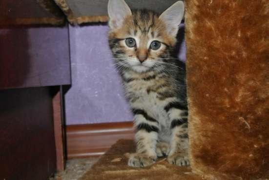 Котята с отличной родословной в Иркутске Фото 5