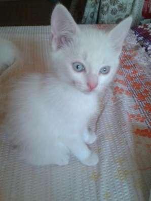Белый котик в доме это- ВОЛШЕБСТВО!!