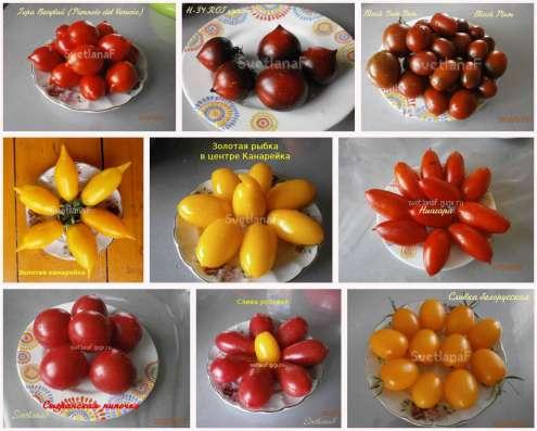 Семена томатов 300 сортов от коллекционера в Пятигорске Фото 4