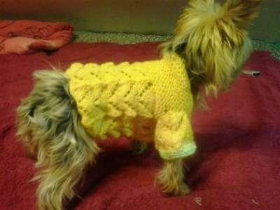 Вязанная одежда для собак в Новосибирске Фото 3