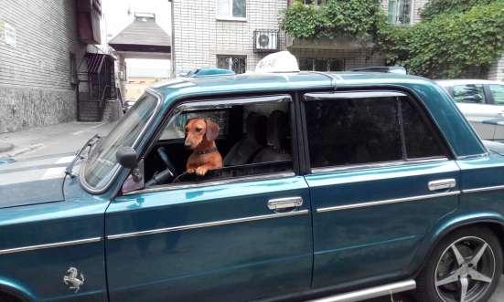 Такси для животных в г. Днепропетровск Фото 5