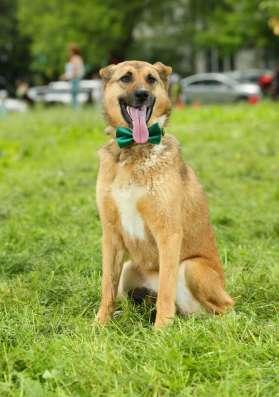 Собака в добрые руки в Раменское Фото 1